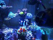 Meerwasser - kompletter Inhalt Fische Korallen