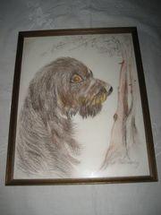 Bild eines Hundes Dackel Rauhaardackel