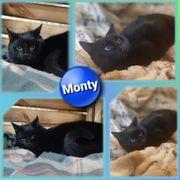 Kater Monty 1 Jahr kastriert