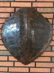 Tierpräperat Schildkröte aus Nachlass