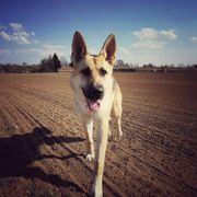 Grundstück für Hundebetreuung und Hundetraining