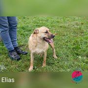 Elias - Nach sechs Jahren endlich