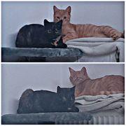 DRINGEND Pflegestellen für 2 Katzenteenager