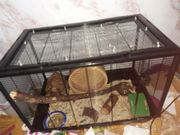 Verkaufe Mäuse