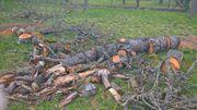 Holz Brennholz Kaminholz Ofenholz - kostenlos