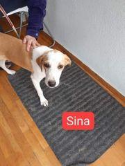 Sina sucht Ihre Familie