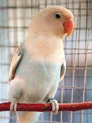 Vögel abzugeben
