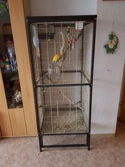 Käfig mit Vogel zu Verkaufen
