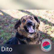 Dito- so schön wie eh