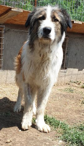 Tierschutzvereine, -heime - Salonia eine ca 2-jährige Hündin