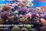 Meerwasser Facebook Gruppe