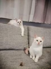 Traumzuhause für Traumkatzen gesucht