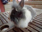 Tolle Kaninchen Lowenkopf Babys