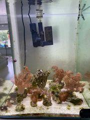 Meerwasser Ableger