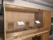 Vogel Zucht Boxen