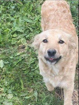 Süße Slava sucht ihr Zuhause: Kleinanzeigen aus Heinsberg - Rubrik Hunde