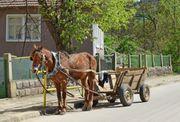 Haus in Bulgarien für Pferdehaltung