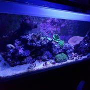 Fluval Reef M90 - Aquarium samt