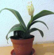 Sonderangebot - Pflanzenkiste Rankpflanze Begonie Aloe