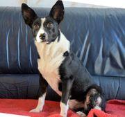 Hundeflüsterer hilf Tierpension Bennstedt