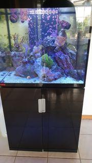 Meerwasser Aquarium komplett Eheim Incpiria