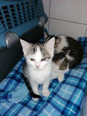 Katzen Babys suchen neues Zuhause