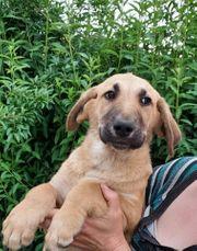 Hundebub EMIL sucht Plätzchen zum