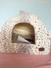 Katzenhöhle Nobby