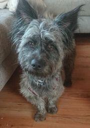 Yaki - Terrier-Mischling aus dem Tierschutz