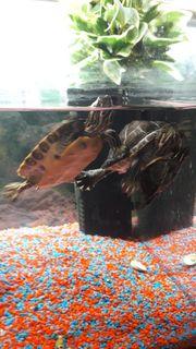 Tolles Angebot schildkröten und Aquarium