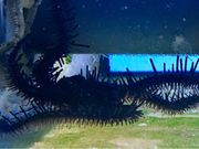 Meerwasser Schwarzer Schlangenseestern zu verkaufen