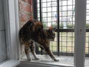 7 Maikätzchen fidel schmusig babykatzen