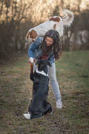 Gassi Service Hunde Service Hundebetreuung