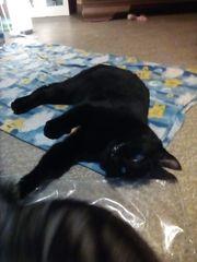 Mischlingskatze sucht zuhause