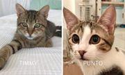 Punto Timmy verspieltes Katzenpaar 9