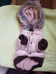Chihuahua Wintermäntel in S