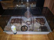Käfig mit Mäusen plus Zubehör