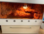 Terrarium mit selbstgebauter Rückwand in