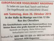 Europäischer Vogelmarkt Haguenau Elsass am