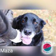 Maza- blieb ohne Schwester zurück
