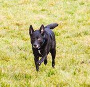 Traumhund Ledo sucht ein neues