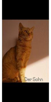 KatzenFamilie sucht ein schönes Zuhause