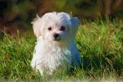 Suche unseren Herzenshund