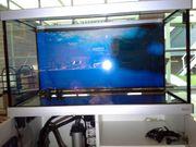 Fluval 200 L Aquarium mit