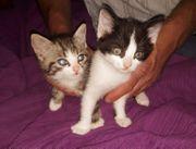 Katzenbabys zu verschenken