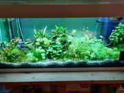 Süßwasser Aquarium - 180L - Fische - Pflanzen -