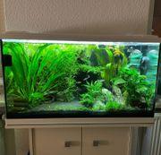 Aquarium EHEIM 126l