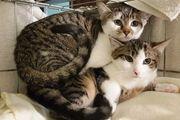 Freigänger-Katzenbaby FIENCHEN geb 10 08