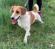 Crespi - Unser liebevoller fröhlicher Hundejunge
