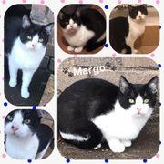Wunderschöne Katze Margo 8 Monate